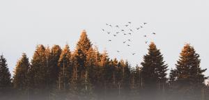 Medio ambiente tableros contrachapados pino y chopo