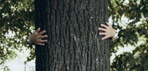 pino para tablero contrachapado